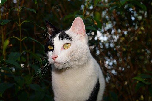 Cat, Female, Pet, Cat Face, Sweet, Domestic Cat, Animal