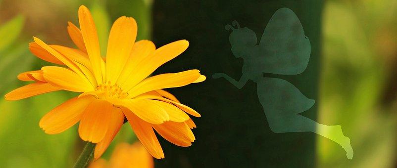 Flower, Butterfly, Female, Genie, Xor, Multiple, Add