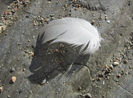 Feather, Lightweight, Easy, Fine, Bird, Isolation