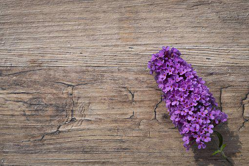 Summer Lilac, Butterfly Bush, Lilac Spear, Plant