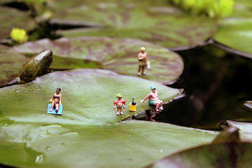 Miniatures, Miniature Photography, Water Lily, Lily Pad