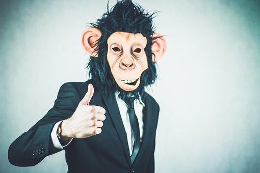 Monkey, Application, Training, Business, Portrait