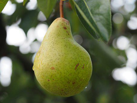 Pear, Fruit, Fruits, Ripe, Healthy, Harvest, Food