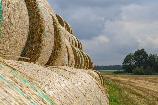 Harvest, Straw, Agriculture, Round Bales, Straw Bales