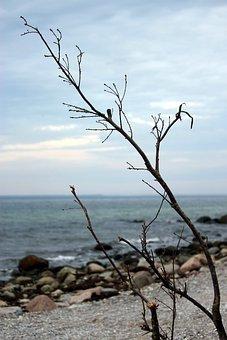 Baltic Sea, Sea, Coast, Beach Landscape