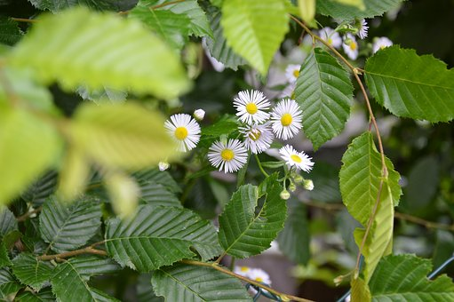 Nature, Hedge, Summer, Flowers, Green, Plant, Leaves