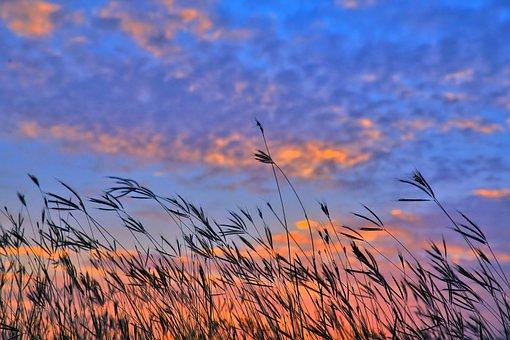 Sky, A Surname, Grass, Huoshao