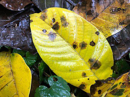 Leaf, Autumn, Wet, Fall Foliage, Transience