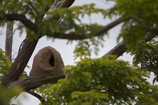 Bird, John Clay, Tropical Bird, Brazilian