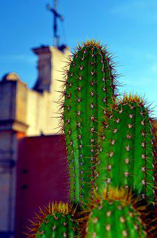 Fat Plants, Church, Cactus
