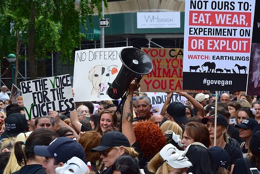 Rally, March, Protest, Signs, Animal Rights
