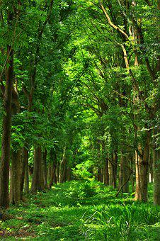 Woodland, Forest, Nature, Tree Wood