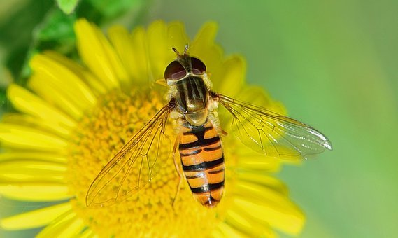 Nature, Fly, Insects, Macro, Bichito, Flower, Gadfly