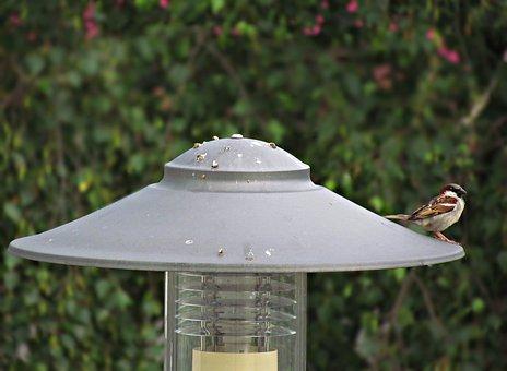 Lantern, The Sparrow, Bird, Wróbelek, Nature, Pen