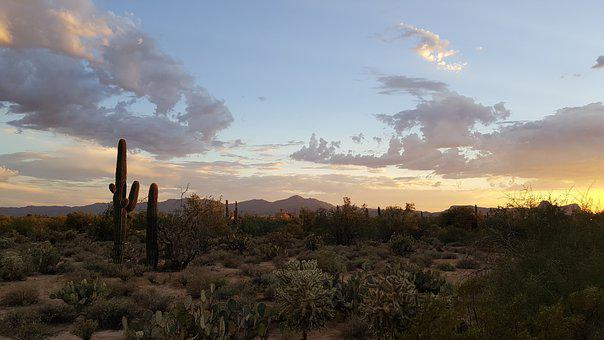 Saguaro, Tucson, Desert, Cactus, Arizona, Park