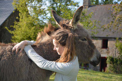 Donkey, Colt, Girl, Young Woman, Complicity, Hug