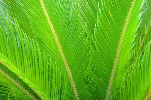 Cycads, Plants, Green