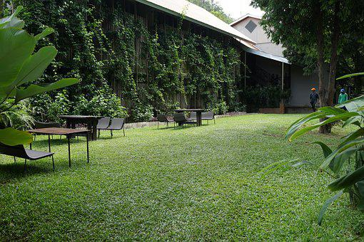 Lawn, Manicured, Greens, Landscape, Nature, Environment