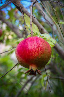 Pomegranate, Fruit, Fresh, Food, Healthy, Natural