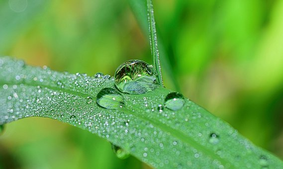 Nature, Drops, Plant, Green, Rain, Water, Leaves, Grass