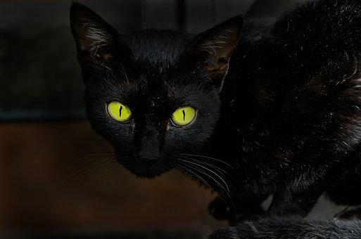 Cat, Eyes, Animal, Omen, Black, Black Cat, Fear, Hairy