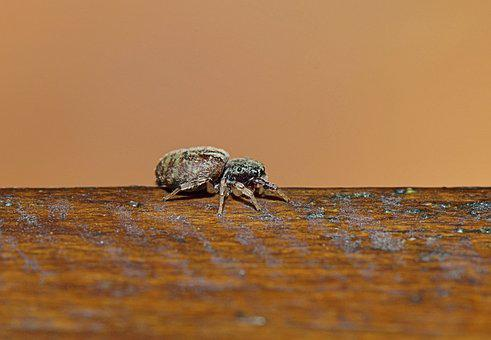 Nature, Insect, Afternoon, Animals, Macro, Bugs, Animal