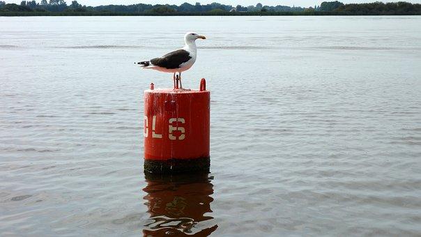 Scheepvaartmarkering, Seagull, Marking, Lateral Marking