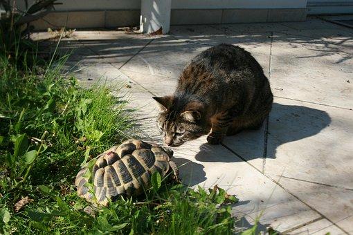 Cat, Turtle, Friendship, Pets, Animal, Animal World
