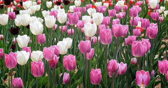 Churros Script, Flowers, Sunny, Spring