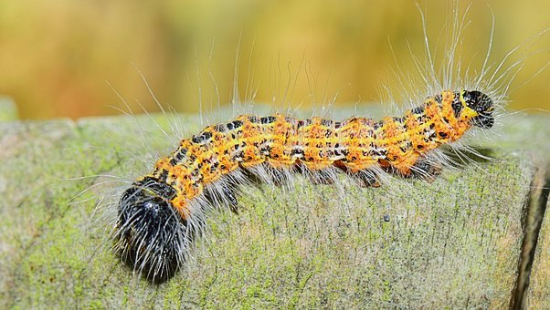 Nature, Worm, Fields, Larva, Foreground, Landscape