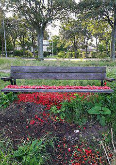 Bench, Rosehip, Red, Colors, Summer, Sweden