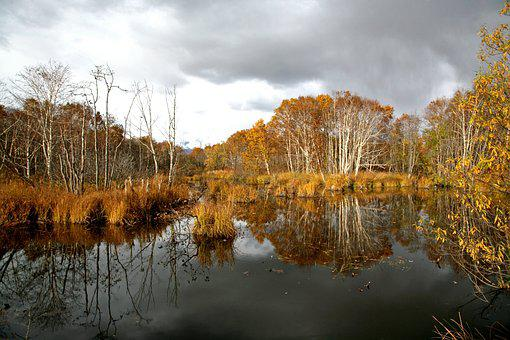 Forest, Small River, Body Of Water, Autumn, Foliage