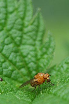 Stinging Nettle, Bug, Nature, Macro