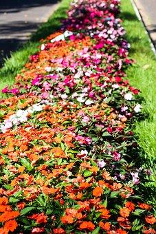 Spring, Flower Arrangement, Small Flower, Flowery