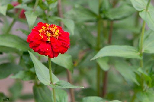 Marigold Flower, Green, Flowers, Fruit, Autumn Leaves