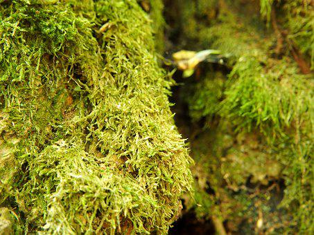 Moss, Green, Forest, Nature, Background, Plant