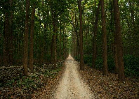 Road, Forest, Safari, Nature, Landscape, Tree, Travel