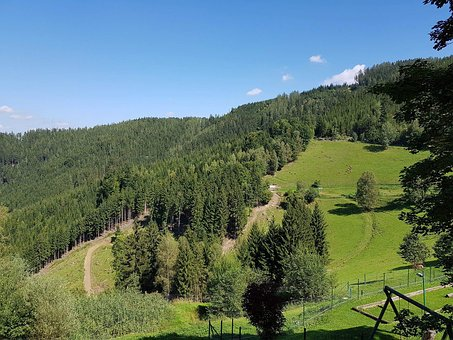 Forest, Slope, Mountain, Trees, Landscape, Nature
