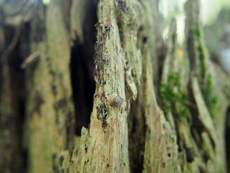 Wood, Forest, Log, Nature, Weathered, Dead Wood