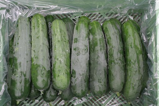 Country Cucumber, Cucumbers, Vegetables, Frisch