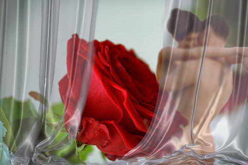 Rose, Love, Red, Romantic, Emotion, Wedding Day