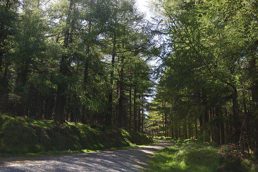 Forest, Ireland, Nature, Irish, Natural, Tree, Outdoor