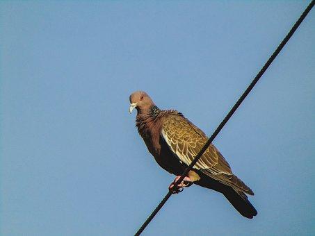 Pigeon, Bird, Nature, Sky, Freedom, Birdie, Paige, Pity