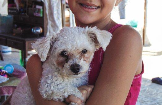 Animal, Dog, Child, Puppy, Pet Animal, Domestic Animals