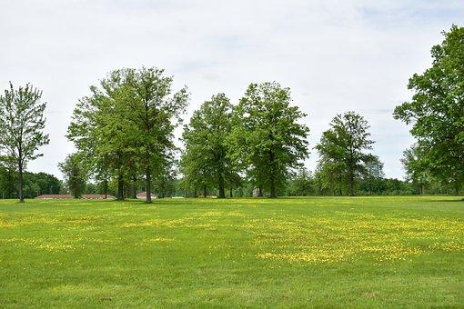 Trees, Grass, Field, Landscape, Green, Sky, Nature