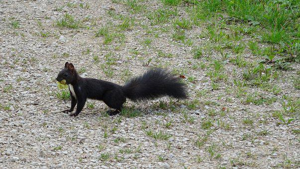 Squirrel, Nuts, Nager, Cute, Eat, Food, Stock, Collect