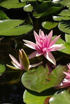 Early Summer Flowers, Summer Flowers, Pink Flower