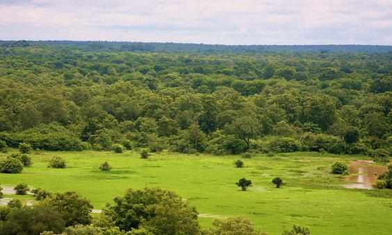 National Park, Mole National Park, Tourism Ghana