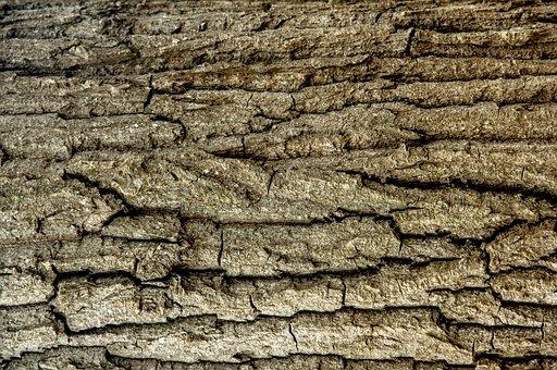 Tree, Tree Trunk, Trunk Detail, Wood, Natural, Bark