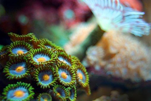Coral, Reef, Sea, Underwater, Marine, Ocean, Exotic